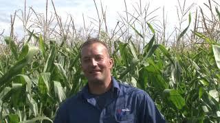 Réussir sa récolte d'ensilage de maïs