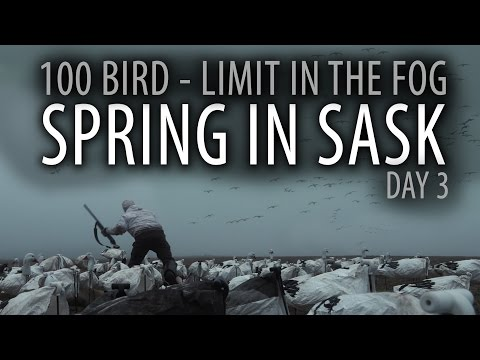 spring-in-sask-day-3--100-bird-limit-in-the-fog--snow-goose-hunting-in-canada