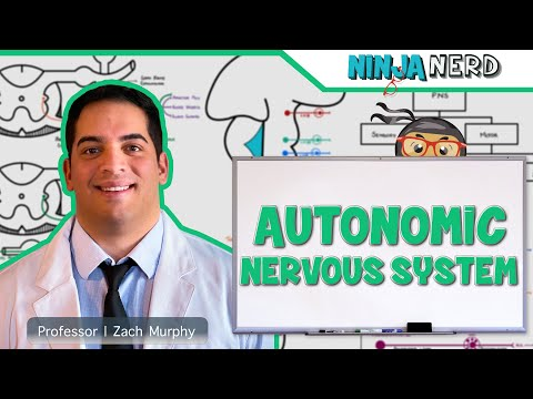 Autonomic Nervous System  Ninja Nerd Science (Video)