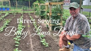 How To Grow Beans (ADVANCED) Complete Growing Guide -   Baby Lima Beans