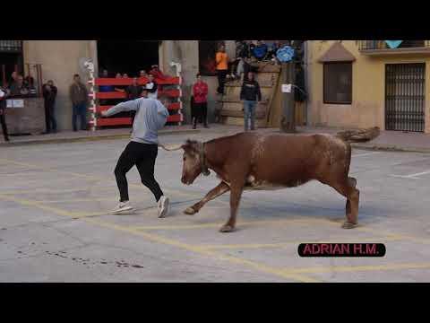 Xerta(Tarragona) 3-11- 2019 Resumen tarde de vacas de la Ganadería Eulogio Mateo