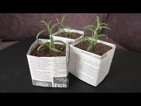 DIY: Newspaper Pots for Seed Starting/Cuttings
