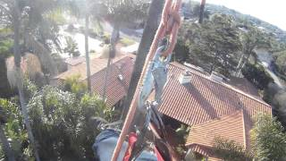 Palm swing   Chatsworth