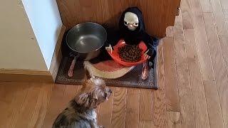 Owner Pranks Dog With Halloween Candy Bowl   Pet Pranks