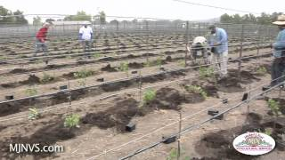 Planting or Re-Planting a vineyard takes a lot of Pre-planning