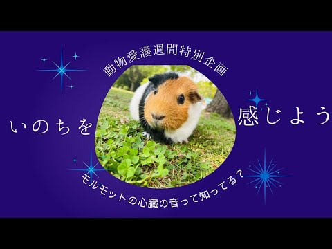 動物愛護週間企画!ふれあい広場〜いのちを感じよう〜