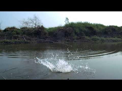 น้ำมันในทะเล buckthorn สำหรับการรักษาของโรคสะเก็ดเงิน