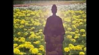 Введение в буддизм. Притча о слепой черепахе и дрейфующем бревне фото