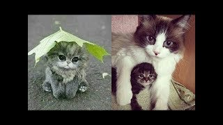 ♥Cute Cats and Kitten Doing Funny Things 2018♥ || Funny Animals