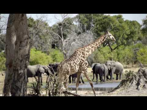 Safari Films in Africa