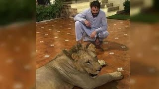 Disgrace: Shahid Afridi has a chained lion at home