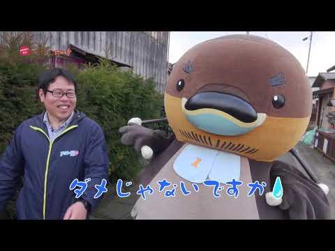 2019/03/26放送・知ったかぶりカイツブリにゅーす