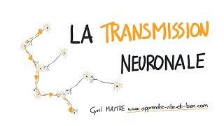 Vignette de NEUROSCIENCES EN DESSINS : La transmission neuronale