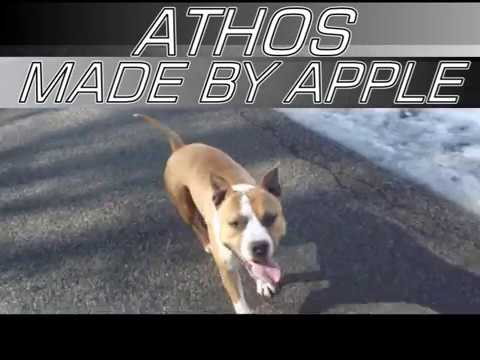Athos made by apple (15 mois) CH Staff O'Class High Power Pack X CH Casanova´s Party Girl