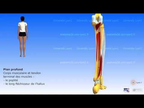 Lentraînement pour les muscles des pieds et le ventre