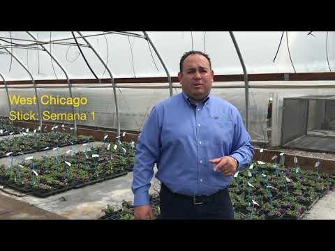 Tech Talk MegaCopa Bacopa en español thumbnail