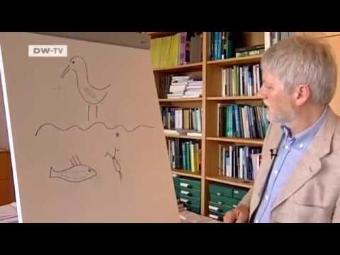 Wie die Parasiten beim Papagei aufzudecken