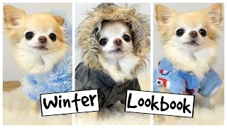 CUTE PUPPY Sized Chihuahua Models TINY DOG CLOTHES