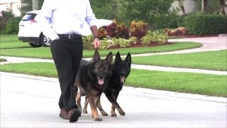 How to WALK your dog properly for PUPPIES and DOGS of all ages!
