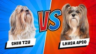 Lhasa Apso Vs. Shih Tzu - Which Is Better? Dog Vs Dog