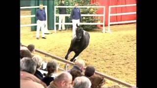 video of Son of Cologne