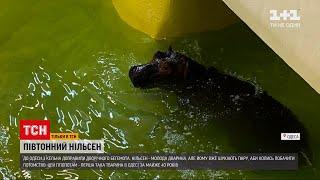 В одесском зоопарке впервые за 40 лет появился бегемот