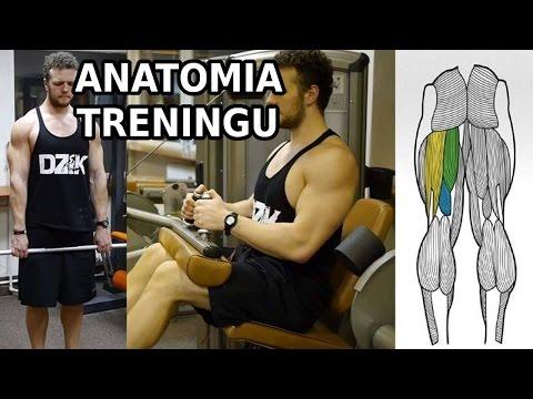Trybów zasilania długość mięśni