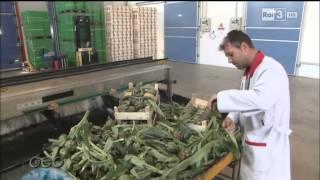 preview picture of video 'Carciofo Spinoso di Menfi Presidio Slow Food - Geo del 29/04/2014'