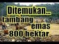 HEBOH!!! Temuan Ladang EMAS 800 Hektar Di ACEH   Berita Terbaru