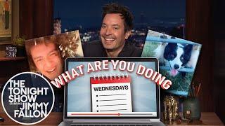 What Are You Doing Wednesdays: Q-Tip TikTok, Photogenic Dog thumbnail