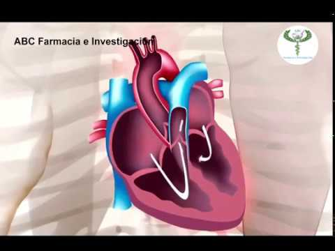 Propiedades terapéuticas hipertensión bean