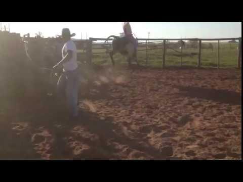 RODEIO EM TOUROS - Treino na Cia LF Souza- Borebi /SP #1