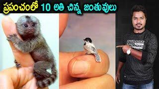 Top 10 Smallest Animals   Unknown Facts    In Telugu   Vikram Aditya Latest Videos   #EP289