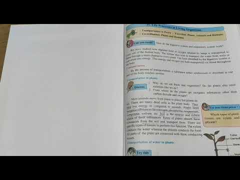 Indicatori pentru thinkorswim opțiuni binare