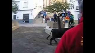 preview picture of video 'Gestalgar vaca envistiendo a los aficionados Fiestas Taurinas Comunidad Valenciana'