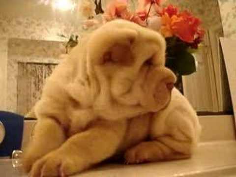 Baby Pups Stinkt