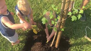 preview picture of video 'Trip, Finn & Ollie planting their first tree'