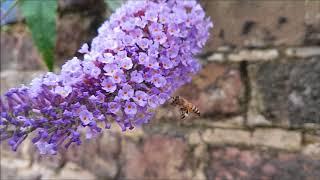 Hard working bee :)