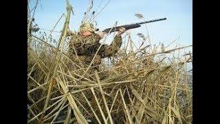 Больше половины охотугодий Тюменской области находится в общем пользовании