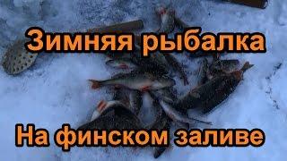 Зимняя ловля окуня на финском заливе