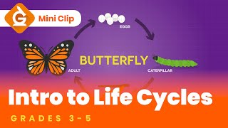 Life Cycles For Kids | Grades 3-5 | Mini-Clip