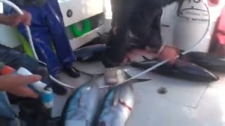 preview picture of video 'Big Game Fishing Charter from Portland Victoria'