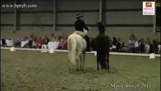 Concurso Morfologico Massenhoven 2013 – Show