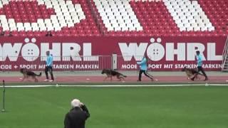 2015 SV BSZS Nuremberg part 38 NKGR-25 Memphis vom Solebrunnen