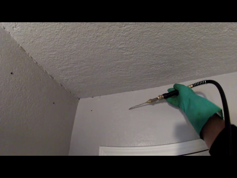 Video how  treat wood  inside the  wall from termites permanently