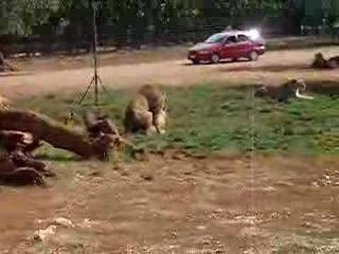 Il sesso scopare una donna con un grande asino