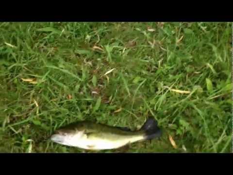 Jared bass fishing at brick pond elmira NY