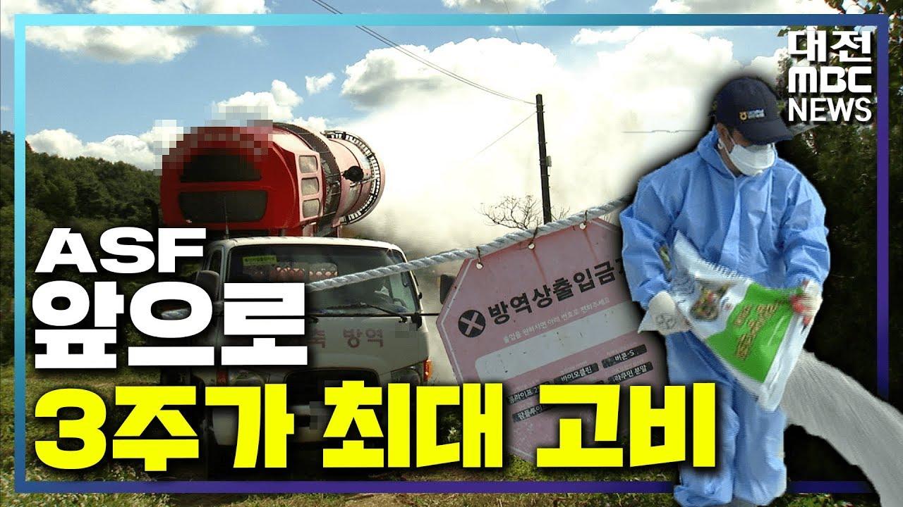 """[리포트]ASF 총력 방역, """"2-3주가 최대 고비"""""""