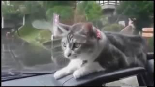 Котики ну просто коты!!!