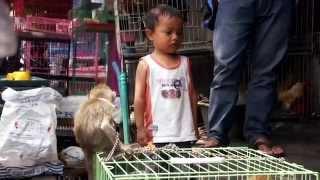 preview picture of video 'Heartbreaking! Abused monkeys at Pasar Burung, Denpasar, Bali'